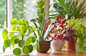 Improve Indoor Air Quality with Houseplants